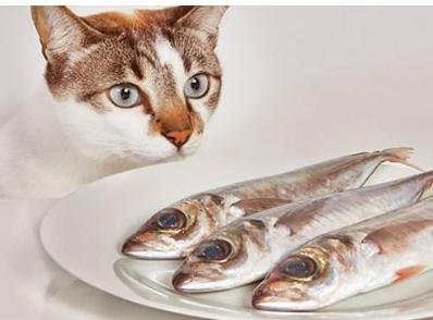Rekomendasi-Makanan-Kucing-Terbaik-