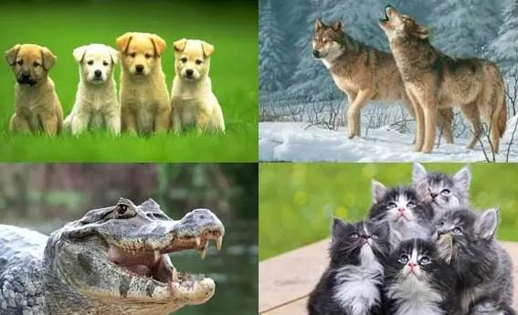 Contoh-Hewan-Karnivora-Serta-Pengertian-&-Ciri,-Habitat